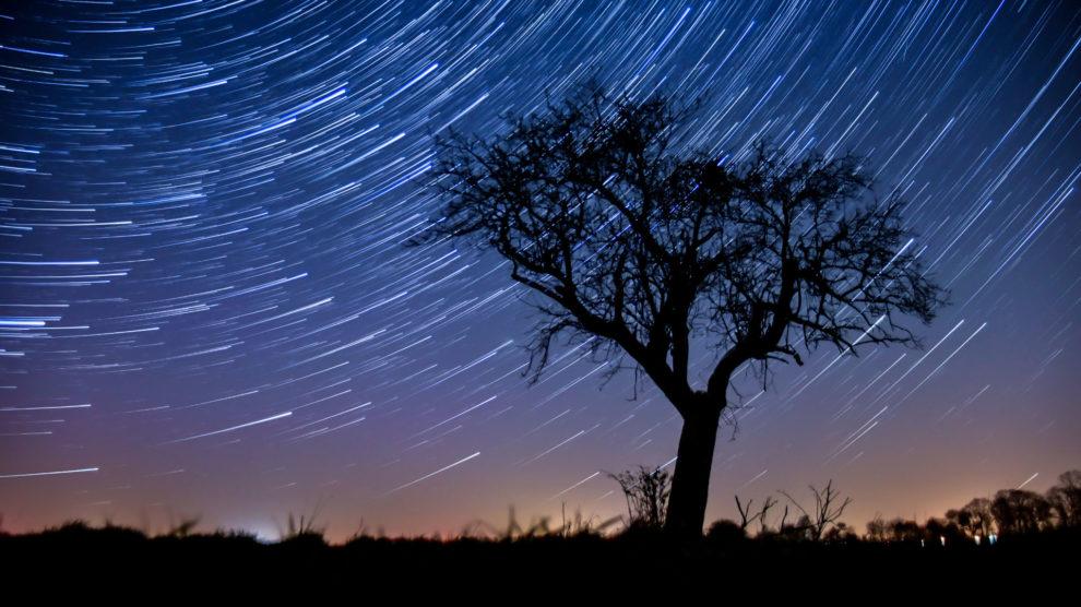 Ruch gwiazd i drzewo